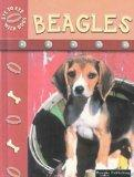 Beagles (Eye to Eye with Dogs)