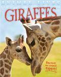 Animal Lives - Giraffes