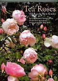 Tea Roses: Old Roses for Gardens in the Sun