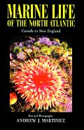 Marine Life of the North Atlantic Canada to New England
