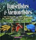 Damselfishes and Anemonefishes