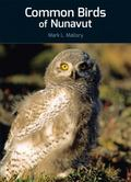 Common Birds of Nunavut