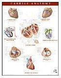 Netter Anatomy Charts: Cardiac Anatomy Chart, 1e (Netter Charts)