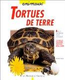 Tortues de terre