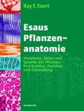 Esaus Pflanzenanatomie / Plant Anatomy (German Edition)