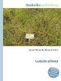 Luzula Pilos
