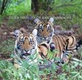 Face to Face : Tiger Families of Ranthambhore