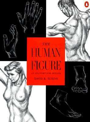 Human Figure An Anatomy for Artists