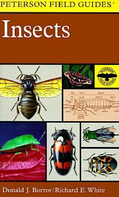 Field Guide to Insects America North of Mexico