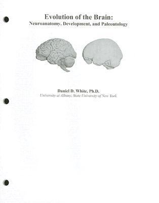 Evolution of the Brain and Language Module
