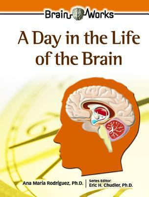 Day in the Life of the Brain