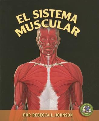 Sistema Muscular/ The Muscular System