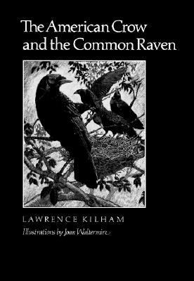 American Crow and the Common Raven
