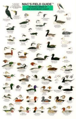 Mac's Field Guide To Water Birds Of The Northeast Coast Mac's Field Guide