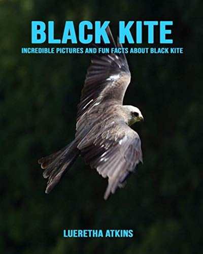 Black kite: Incredible Pictures and Fun Facts about Black kite