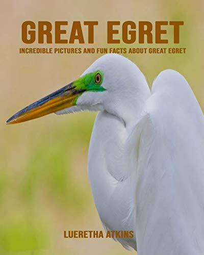 Great Egret: Incredible Pictures and Fun Facts about Great Egret