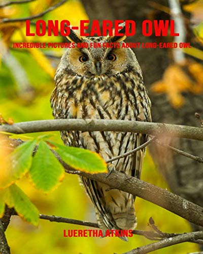 Long-eared owl: Incredible Pictures and Fun Facts about Long-eared owl