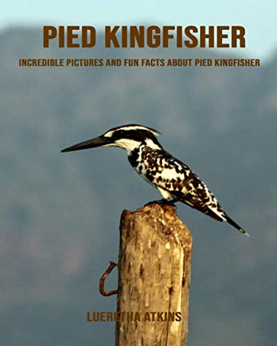 Pied kingfisher: Incredible Pictures and Fun Facts about Pied kingfisher