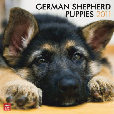 German Shepherd Puppies 2011 Square 12X12 Wall