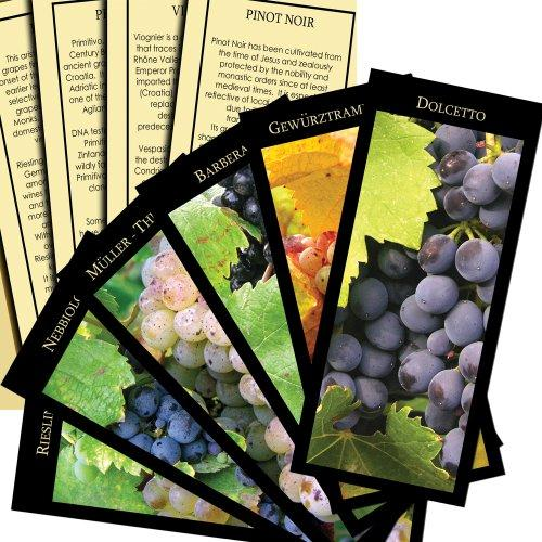 Vinifera: The World's Great Wine Grapes And Their Stories