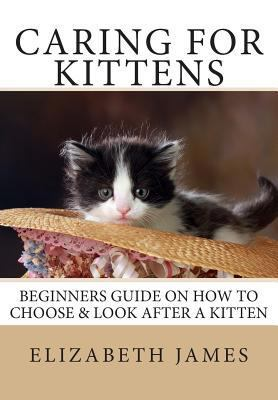Caring for Kittens : Beginners Guide on How to look after a Kitten