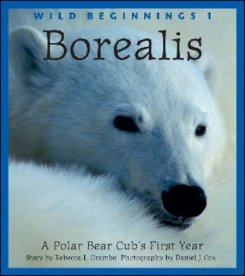 Borealis A Polar Bear Cub's First Year