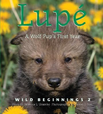 Lupe A Wolf Pub's First Year