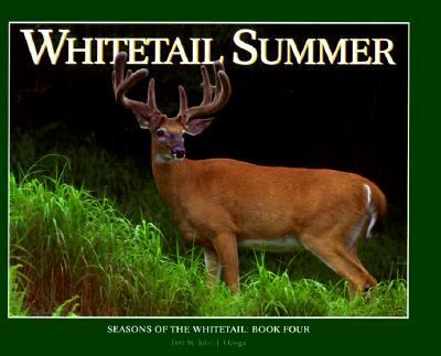 Whitetail Summer