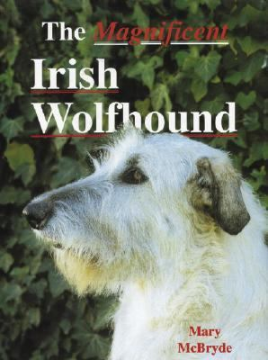 Magnificent Irish Wolfhound