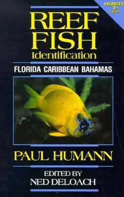 Reef Fish Identification Florida, Caribbean, Bahamas