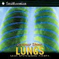 Lungs Your Respiratory System