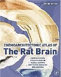 Rat Brain
