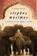 Elephas Maximus A Portrait Of The Indian Elephant