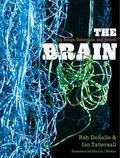 Brain : Big Bangs, Behaviors, and Beliefs