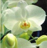 White (Colour Garden)