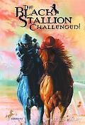Black Stallion Challenged