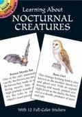 Learning About Nocturnal Creatures