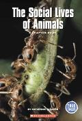 Social Lives of Animals A Chapter Book