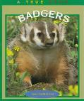 Badgers (True Book)
