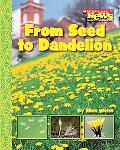 From Seed to Dandelion
