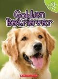 Golden Retriever (Top Dogs)
