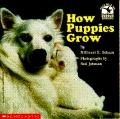 How Puppies Grow