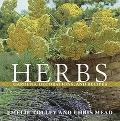 Herbs: Gardens, Decorations, and Recipes - Emelie Tolley - Paperback