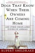 Dogs That Know When Their Owners Are Coming Home And Other Unexplained Powers of Animals