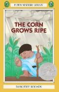 Corn Grows Ripe