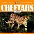 Cheetahs for Kids (Wildlife for Kids Series)