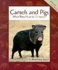 Camels and Pigs What They Have in Common