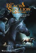 Black Stallion Mystery