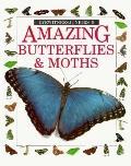 Amazing Butterflies and Moths - John Still