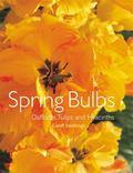 Spring Bulbs Daffodils, Tulips And Hyacinths